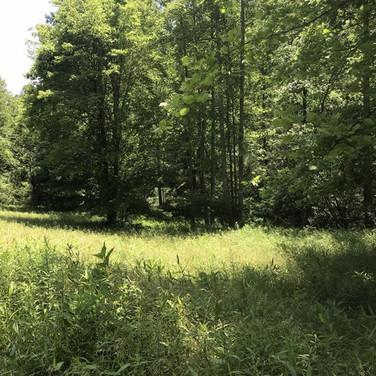 Hughes 184-Wilkes County-17.jpg