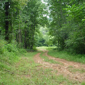 Hunting Land in Alexander County NC