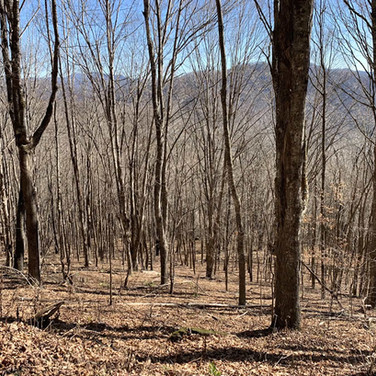 Avery County Land in Newland NC
