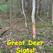 Deer Signs