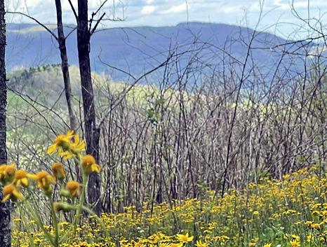 ashe-county-155-acres-bongaard-29.jpg