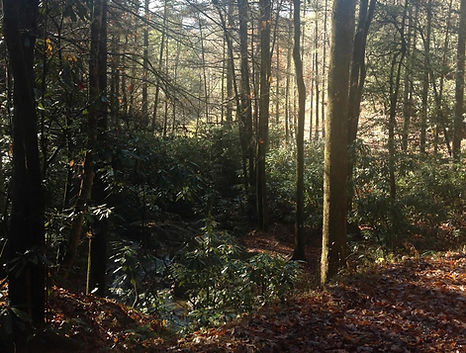 wilkes-county-breden-25-acres-01.jpg