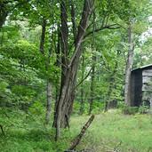 Alexander County NC land