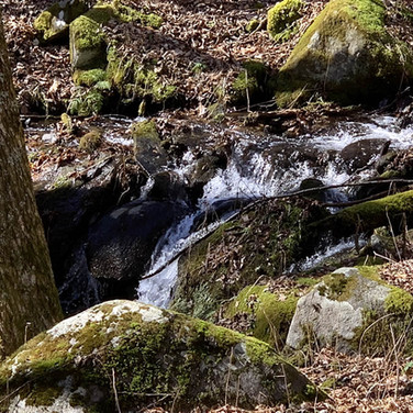 Avery County Land with Streams