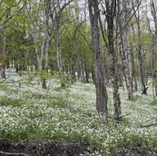 ashe-county-155-acres-bongaard-25.jpg