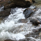 Land with Trout Stream for sale in Wilkes County