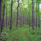 Mountain Land in Alexander County North Carolina