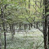 ashe-county-155-acres-bongaard-26.jpg