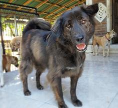 Adopt Bejo