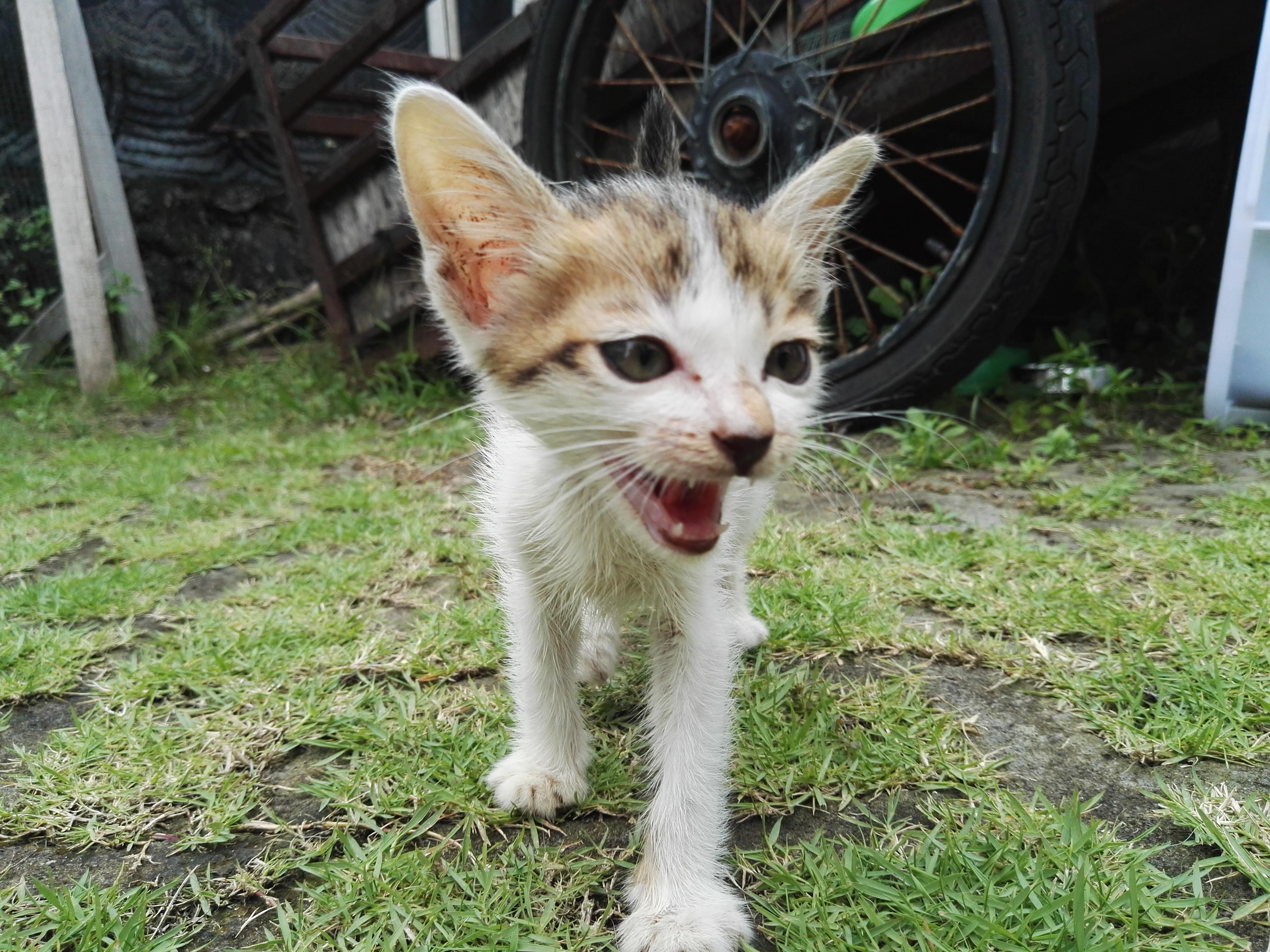 1_kitty