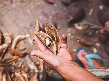 No dia da Biodiversidade, mulheres do Cerrado debatem modos de vida e resistências nos territórios