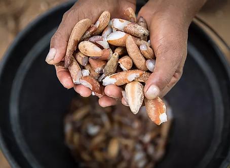 Agricultores familiares lançam loja virtual com produtos dos biomas Cerrado e Caatinga