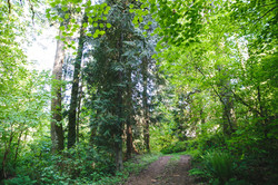 The forest path