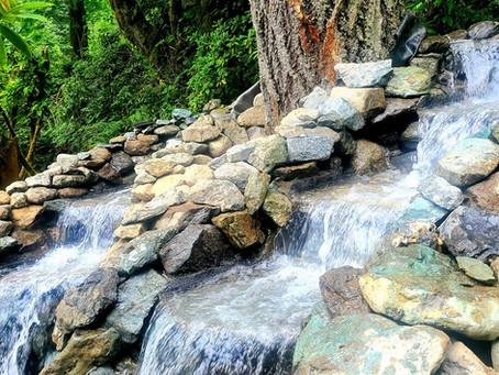 Updates around Arborea Falls