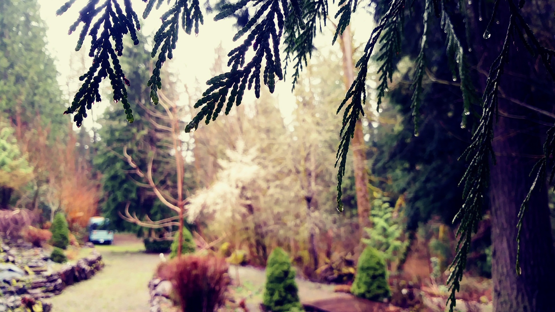 Garden path near the lower pond