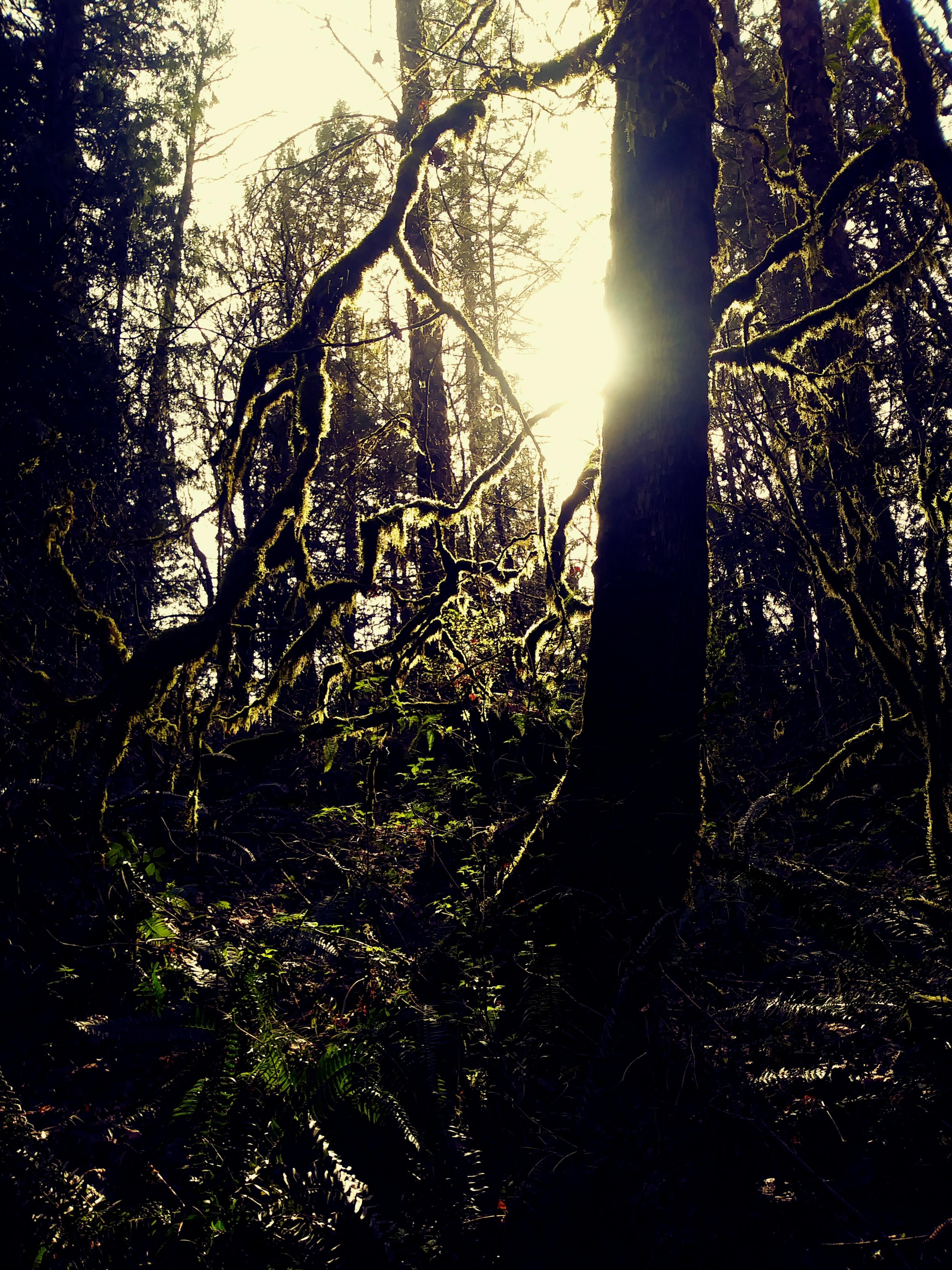 Late sunlight