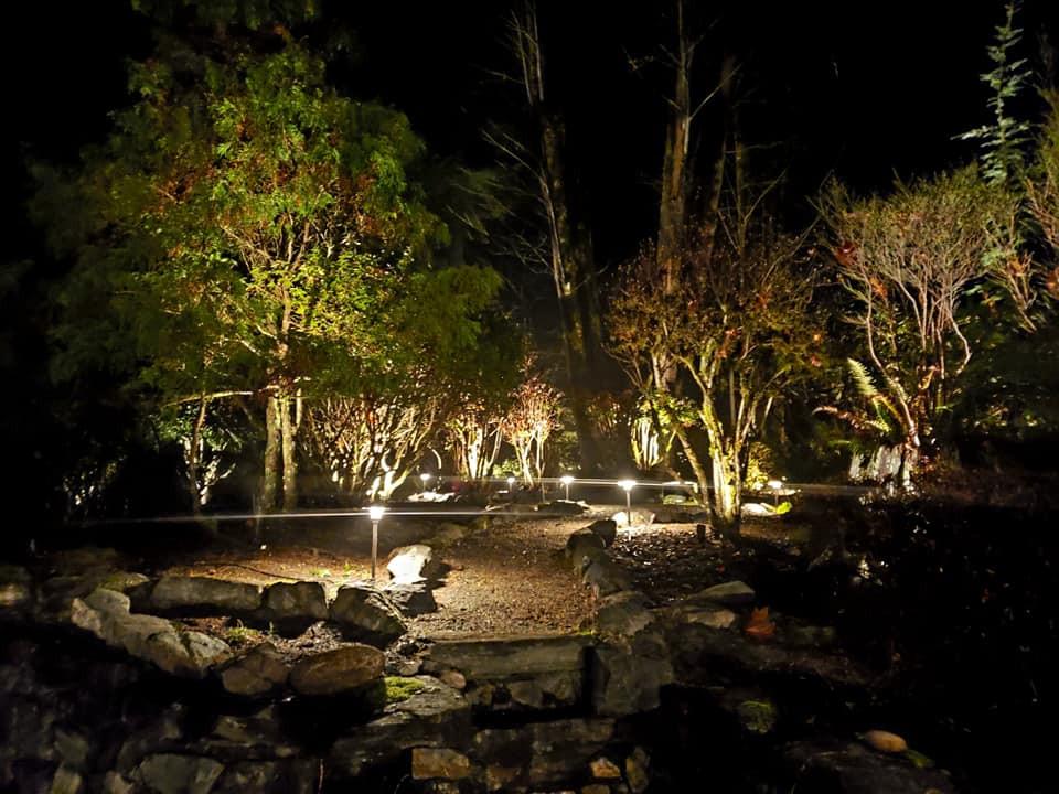 Front garden at night