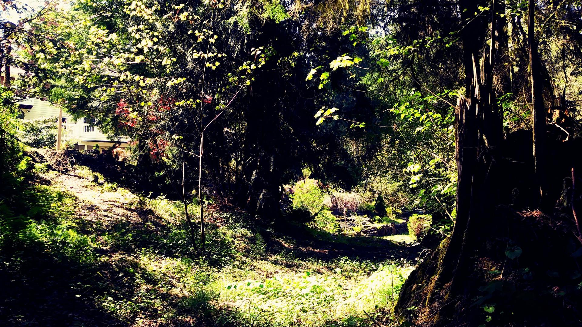 Secret path to the woodland fairies