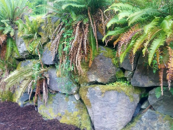 Ferns and mosses abound