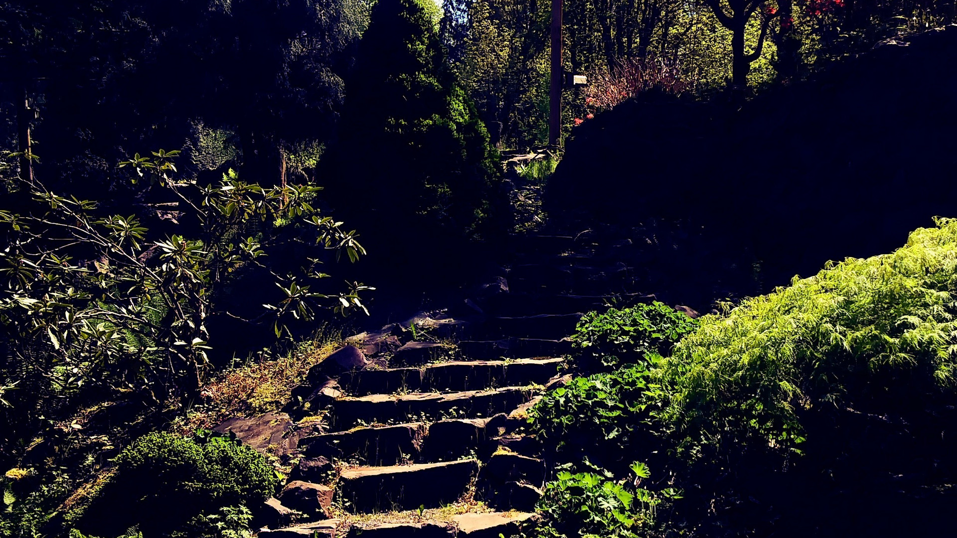 Down the stone stairs to the lower pond