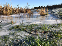 201231 Frost (7) (1)