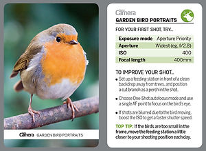 Garden Bird Portraits.jpg
