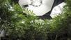 Cannabis Grower Diversifying