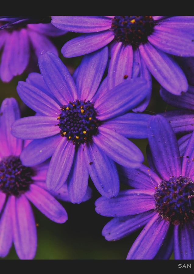 San Fran Flowers 5x7.jpg