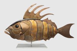 Brown Fins Fish