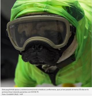 Harley es el perro terapeuta que alivia el estrés de médicos en ciudad de México