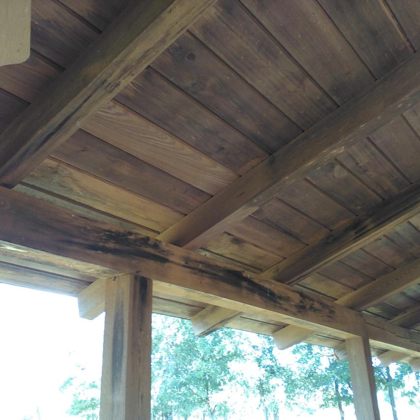 log home timbers mold