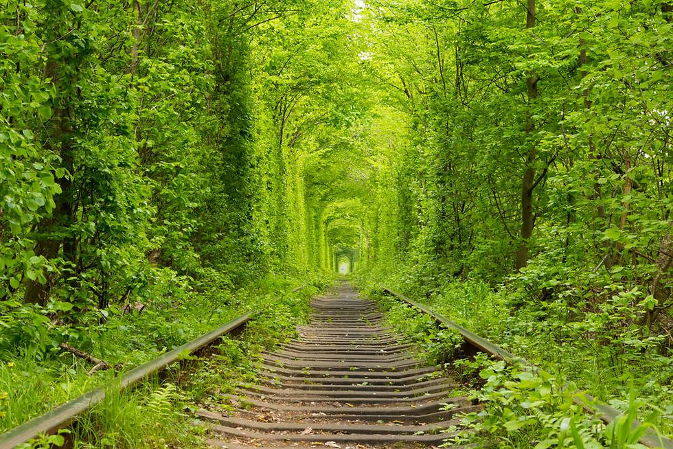 amazing path.jpg