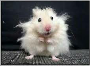 Mouse freaking out asks why you feel it is stressed.