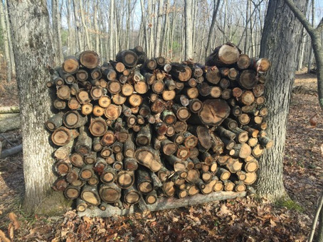 Is Stacking Your Firewood Between Trees a Good Idea?