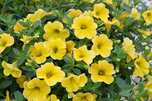 Uno Yellow