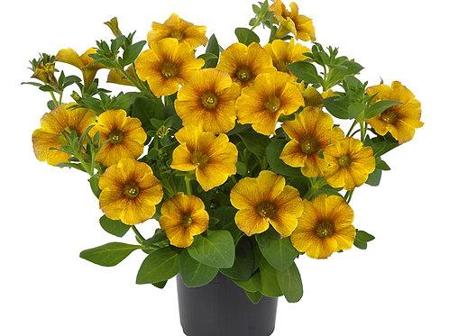Beautycal Caramel Yellow