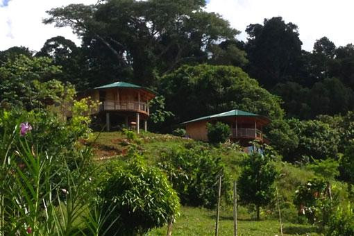 coconut-monkey-house-distant-view.jpg