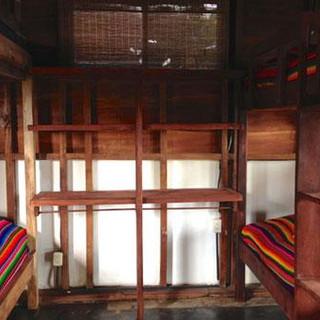 toucan-macaw-bedroom.jpg