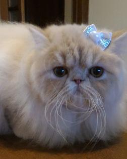 Lully_Cat.jpg