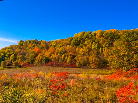 Fall In The Ottawa Valley