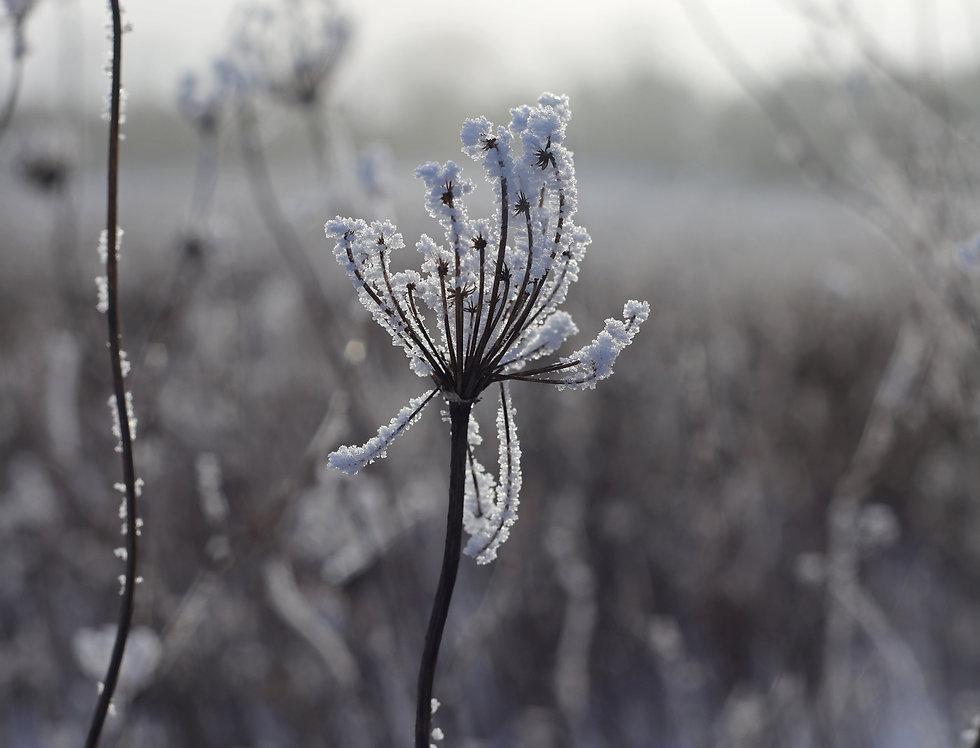 Wintery Dawn
