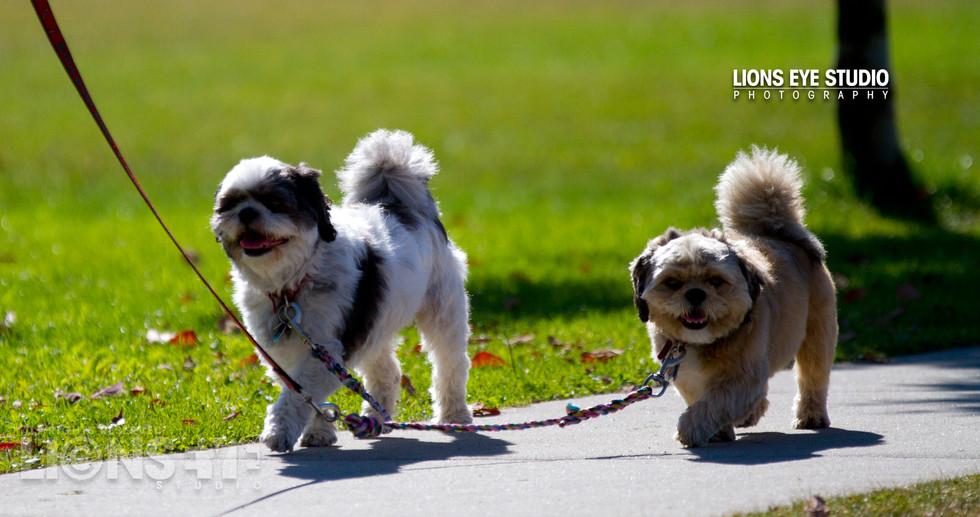 happy_dogs_02.jpg