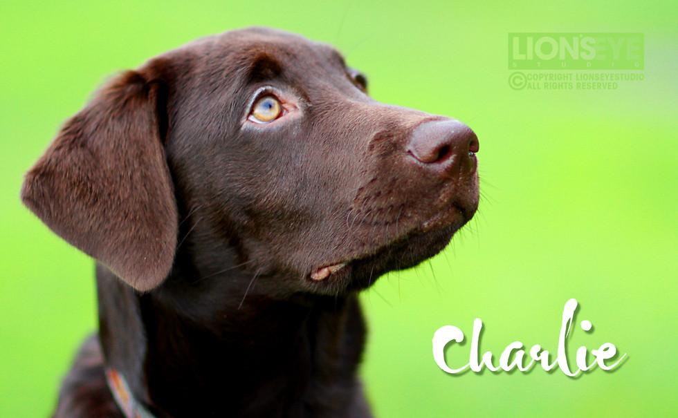 happydog_03.jpg