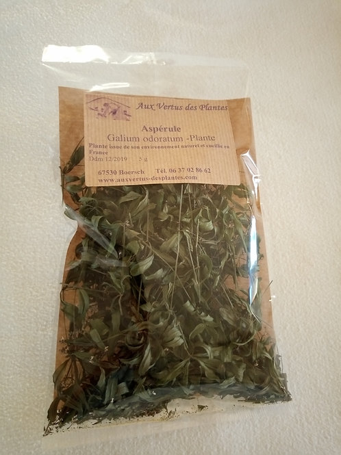 Plante Aspérule odorante