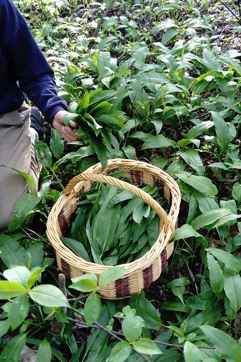 Plante Ail des ours (Allium ursinum) 15 g