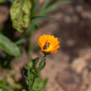 AVDP - jardin-29.jpg