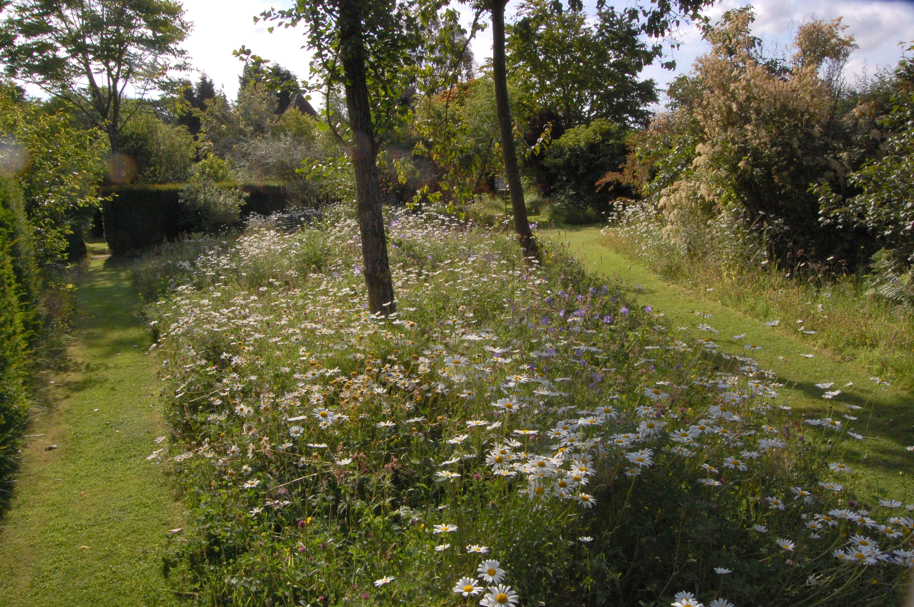Wild flower meadow.