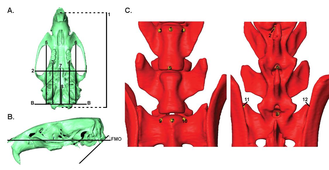 Figure 2_measurements.tif