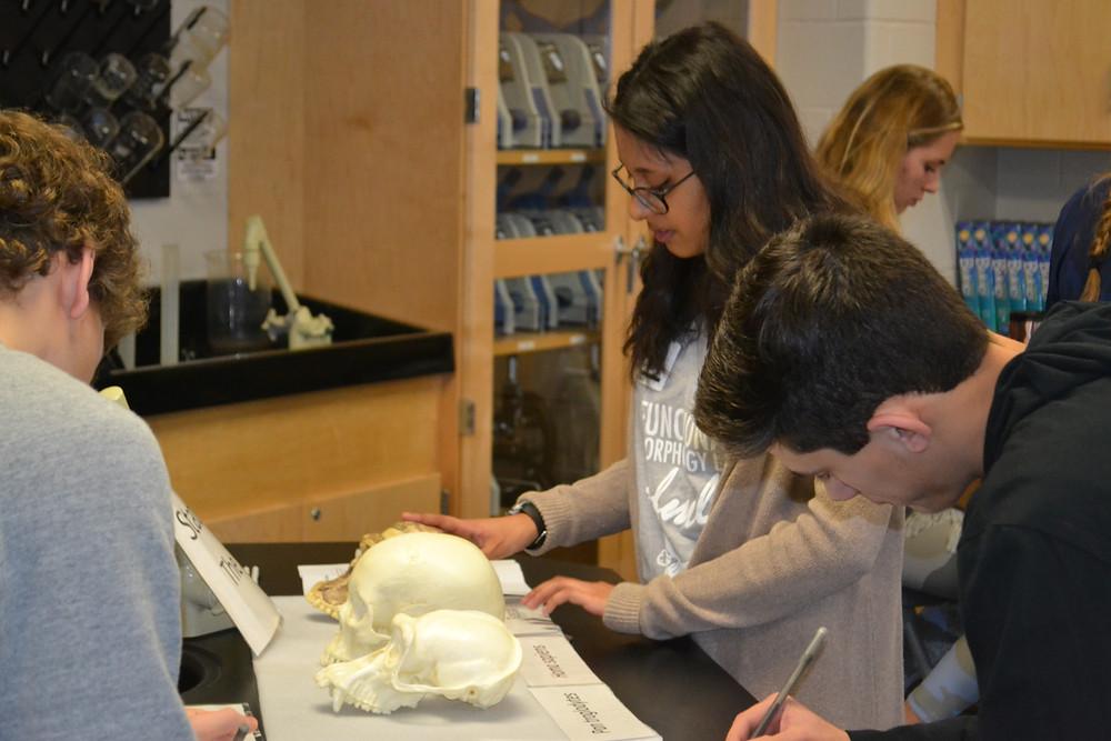 Maya helps students compare chimpanzee, human, and Australopithecus crania