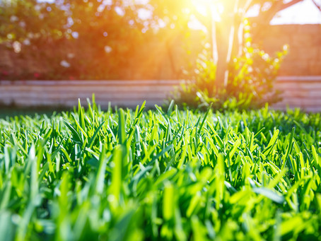 Identifying & Getting Rid of the Common Weeds in Your Lawn